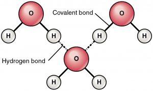 Hydrogen Bond 13