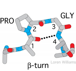 Secondary structure of proteins 3